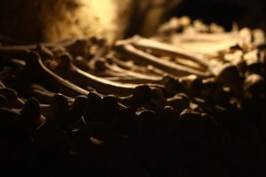 The catacombs are filled with thousands of Parisian bones, many of which are stolen by cataphiles. Photo Credit: Chris Waits